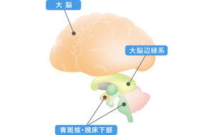 イメージ図 脳